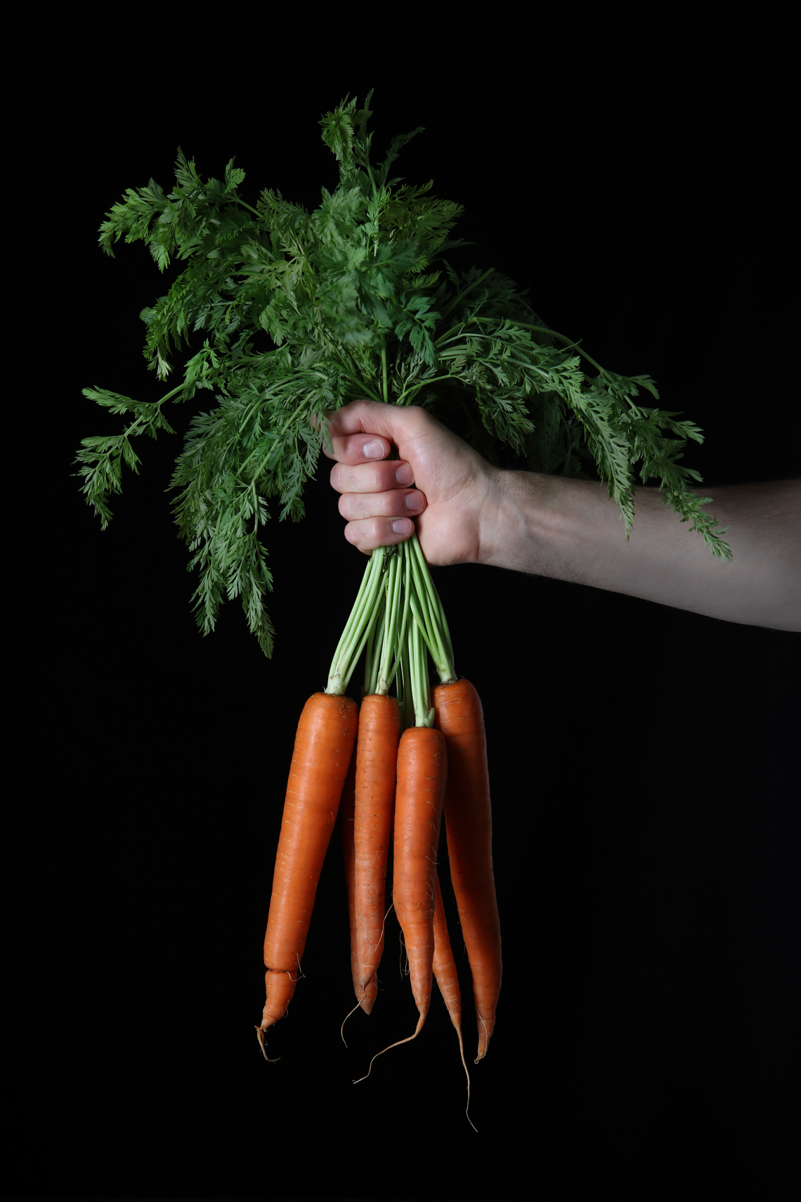 Bunch-Of-Carrots-Hand-Web