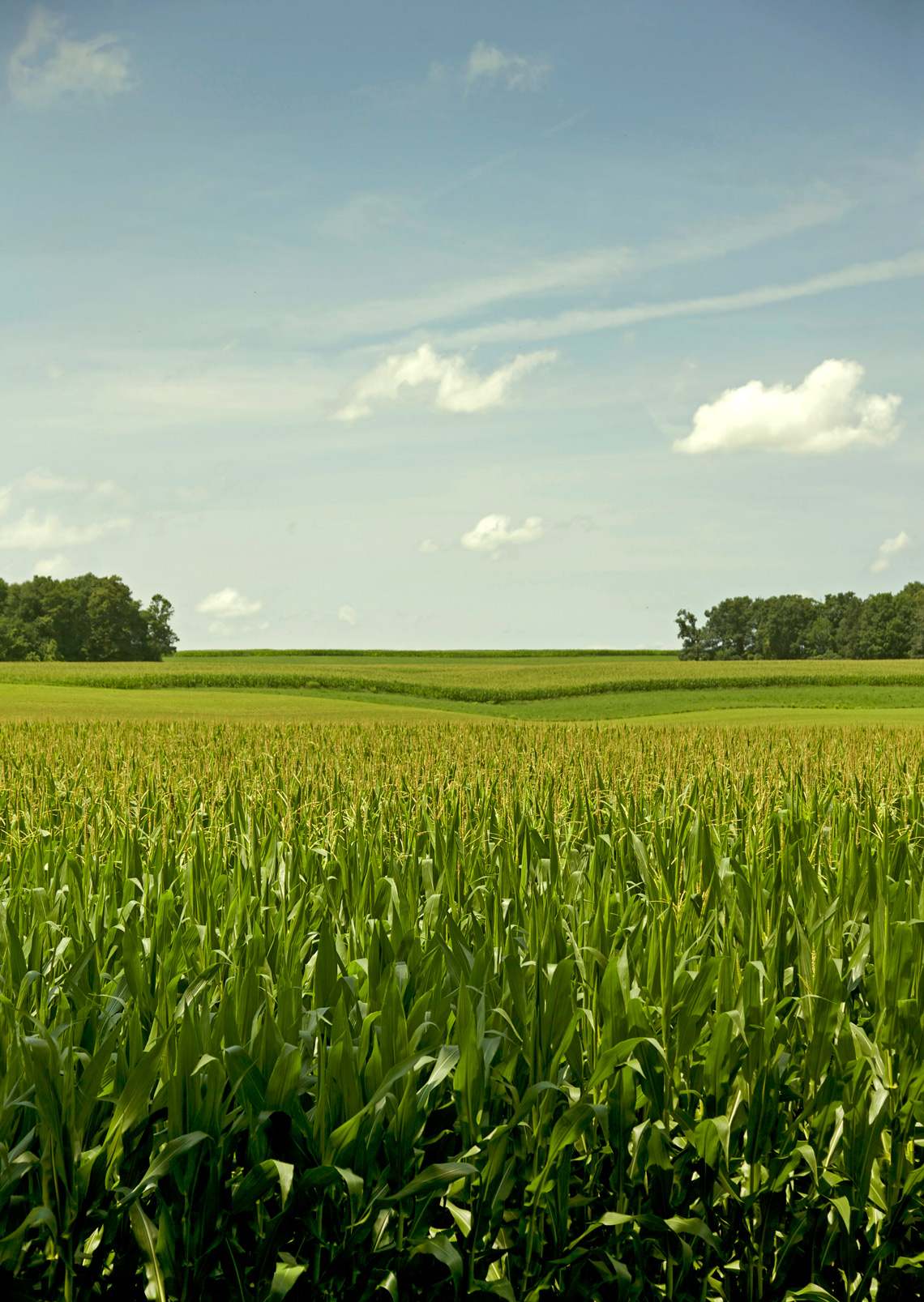 Corn-Field-5461-web