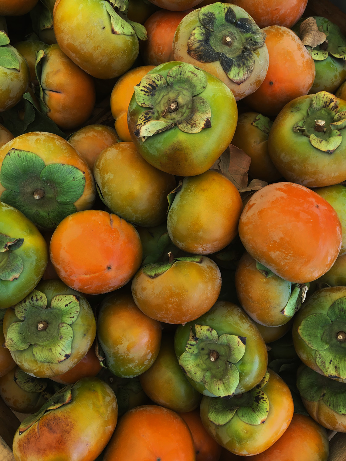 persimmons-web